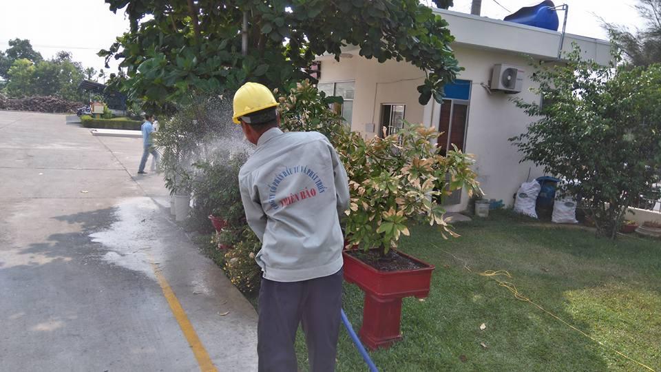 Chăm sóc cây xanh tại Cty CP Giấy SG Miền Trung