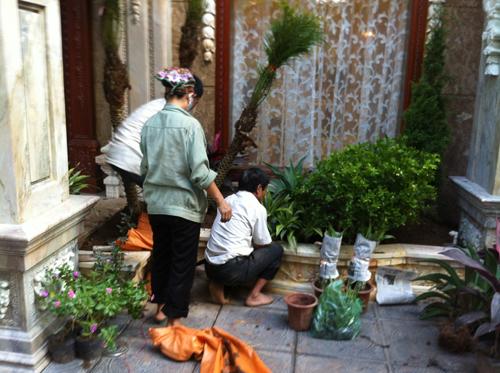 Trồng cây khuôn viên